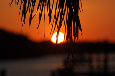 sunset_pine.jpg